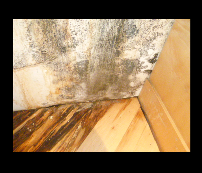 When a Water Damage Becomes a Mold Problem