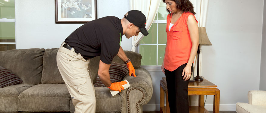 Novato, CA carpet upholstery cleaning
